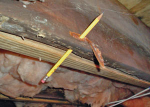 Destroyed crawl space structural wood in Portsmouth
