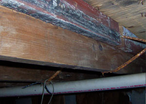 Rotting, decaying wood from mold damage in Washington Court House